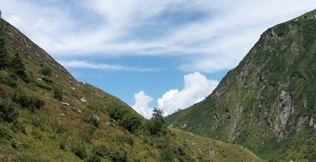 Baum im Bergtal