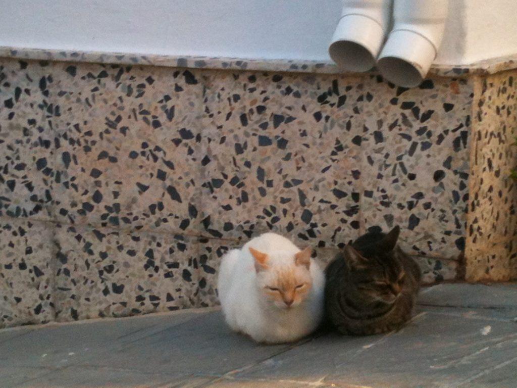 2 Katzen nebeneinander
