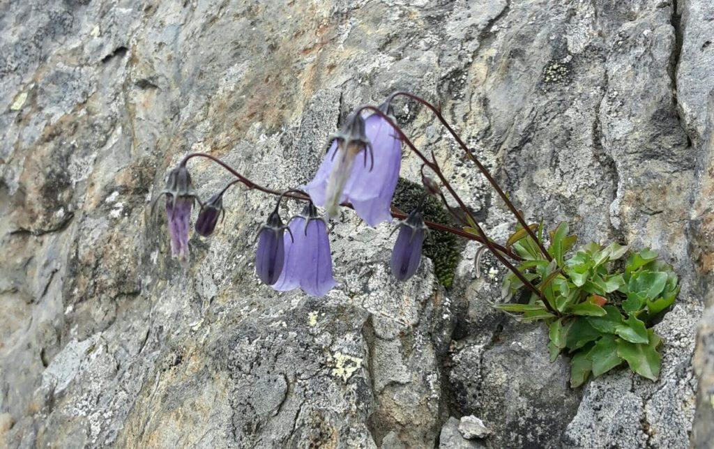 Blume im Fels 2